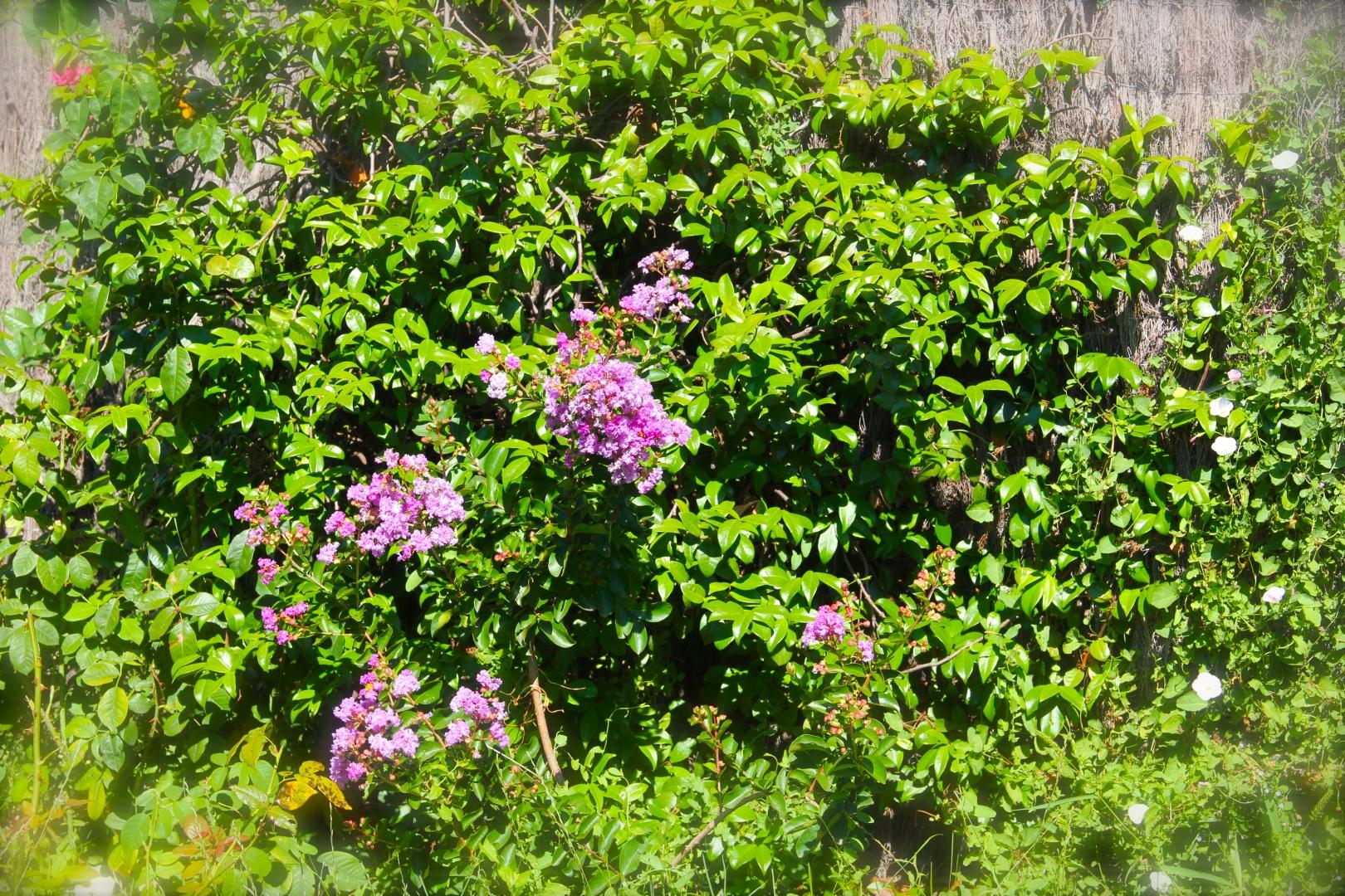 Le Jardin Botanique Côté Luberon_The Botanical Garden_IMG_8281