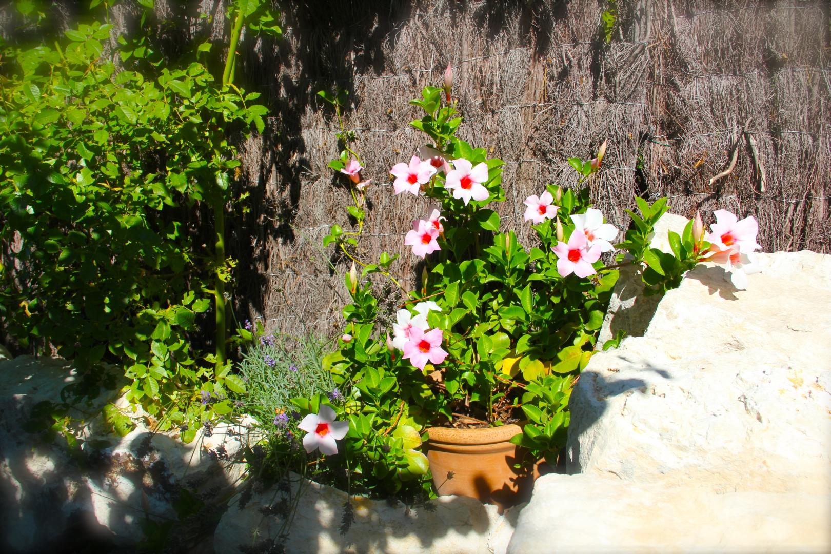 Le Jardin Botanique Côté Luberon_The Botanical Garden_IMG_8293