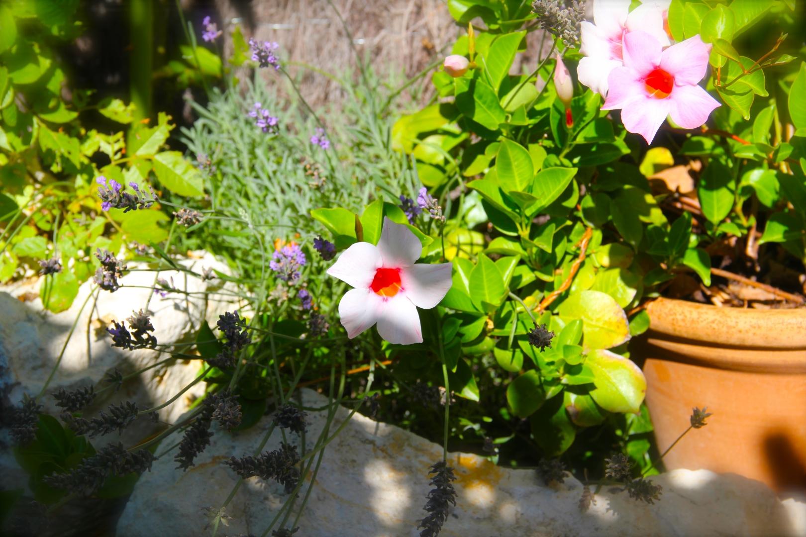 Le Jardin Botanique Côté Luberon_The Botanical Garden_IMG_8294