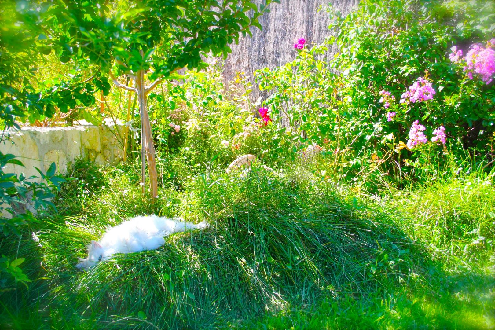 Le Jardin Botanique Côté Luberon_The Botanical Garden_IMG_8337